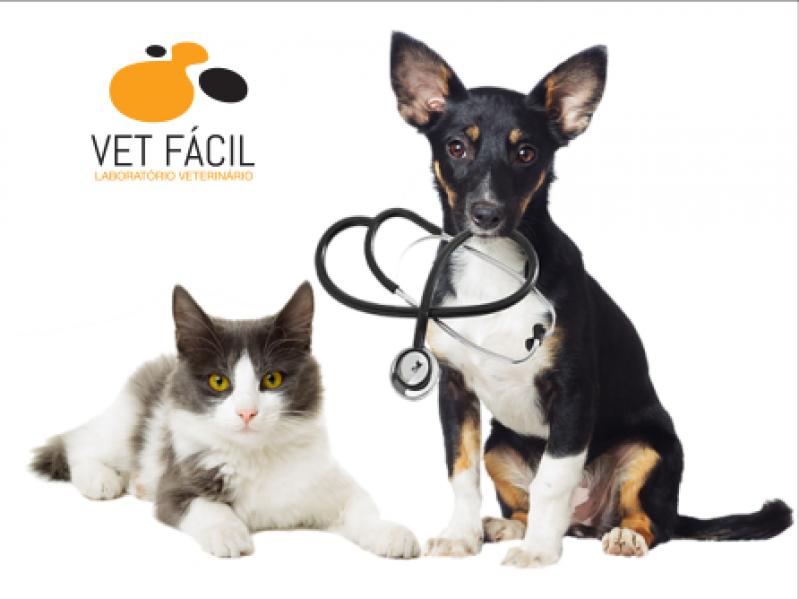 Exame Bioquímico Cachorro Santo Amaro - Exame em Cães