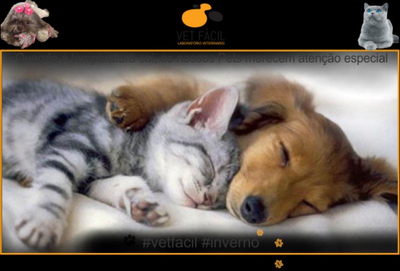 Exame Bioquímico Cães Vila Andrade - Exame para Leptospirose em Cães