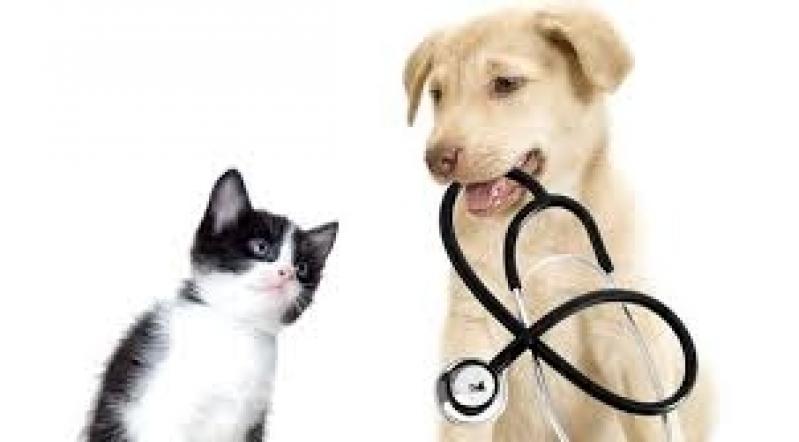 Exames Laboratoriais Cães e Gatos Preço Pacaembu - Diagnóstico Veterinário