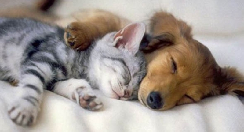 Exames Laboratoriais Cães e Gatos Capão Redondo - Exames Laboratoriais para Cachorro