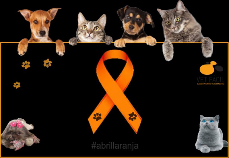Exames Laboratoriais para Animais Domésticos Preço Vila Matilde - Exames Laboratoriais para Gatos