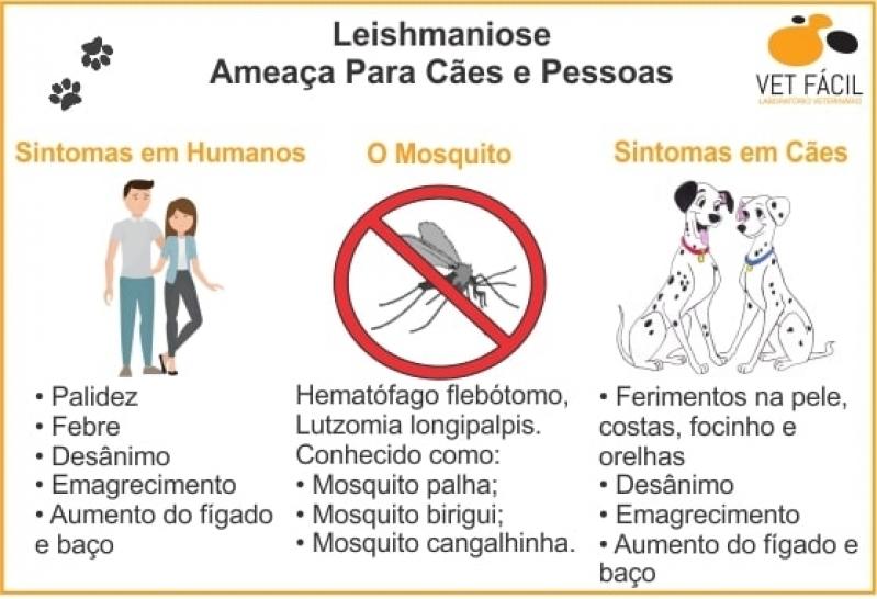 Exames Laboratoriais para Animais Jardim América - Laboratório Veterinário