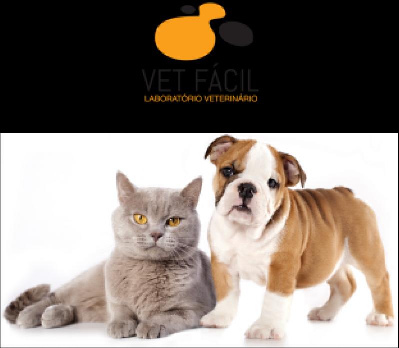 Exames Laboratoriais para Exame de Sangue Aricanduva - Exames Laboratoriais Cães e Gatos