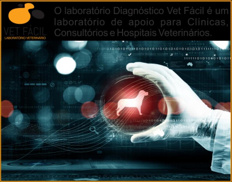Exames para Cachorros Santo André - Exame de Sangue para Cães