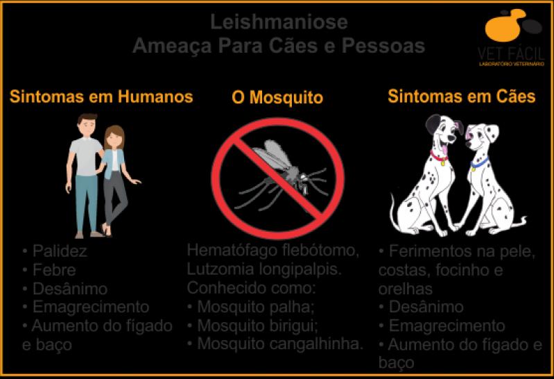 Exames para Cães São Bernardo do Campo - Exame para Leptospirose em Cães