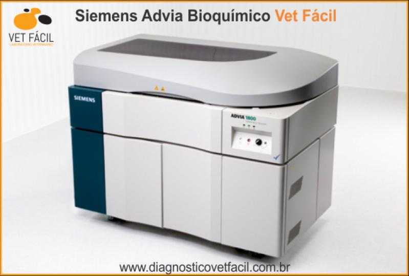 Onde Encontro Exame Bioquímico Cachorro Belém - Exame Bioquímico Cães