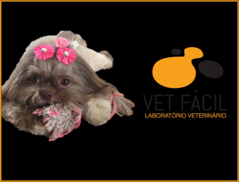 Preço de Exames para Cães Itapevi - Exames para Cães