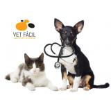 exame bioquímico cachorro Penha