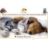 exame bioquímico cães Campo Grande