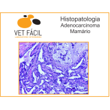 exame citológico veterinário Vila Medeiros