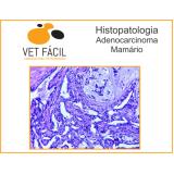 exame histopatológico veterinário Socorro