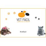 laboratório veterinário para gatos