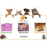 onde encontro exames laboratoriais para animais domésticos Santo Amaro